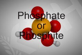 kdh-phosphore